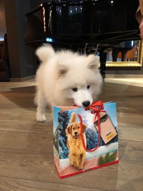 Welcom dog pack